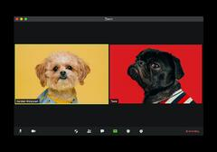 Dogs on a Zoom call