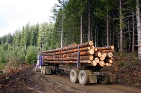 Truck carrying logs