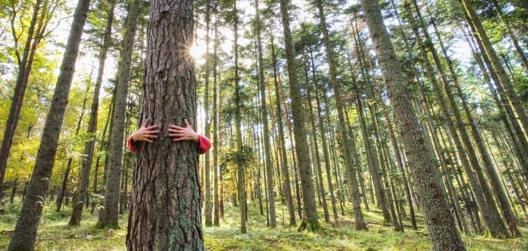 GED et dématérialisation : pour une démarche éco-responsable